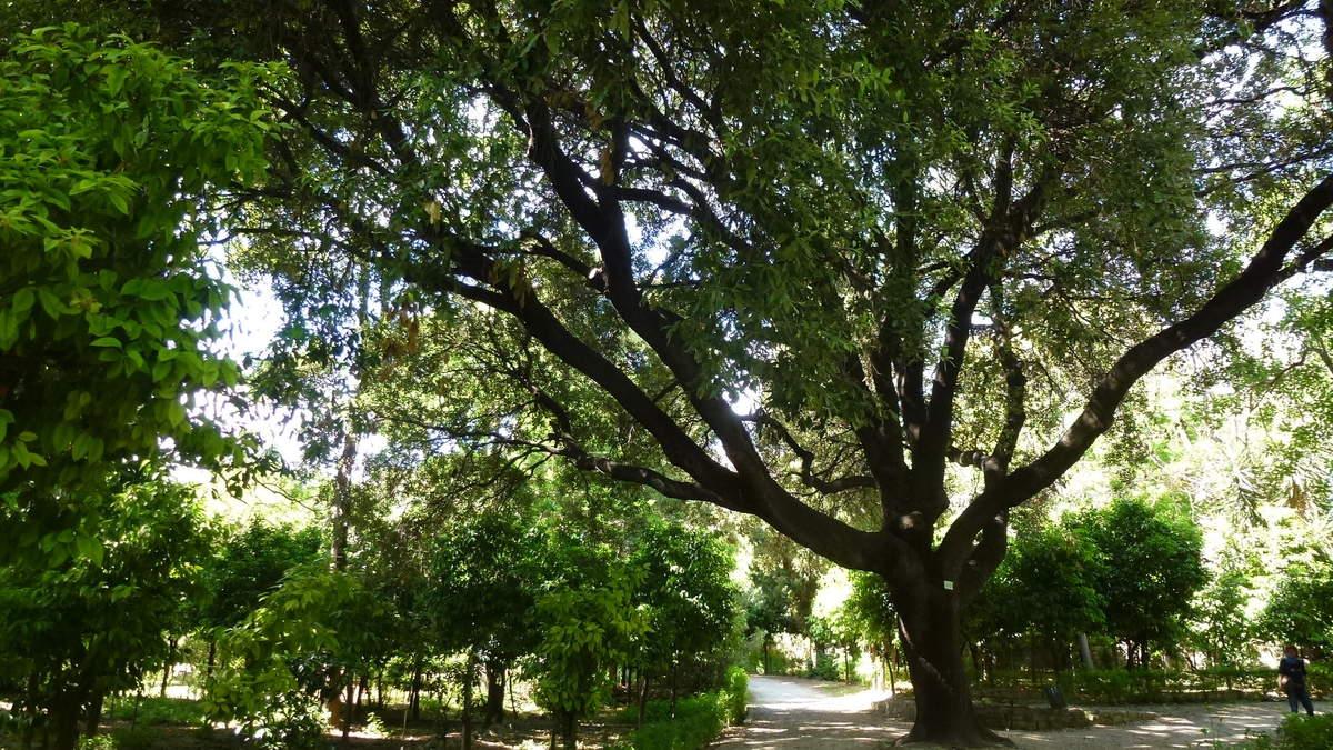 Une oasis de fraîcheur, au centre d'Athénes le jardin national