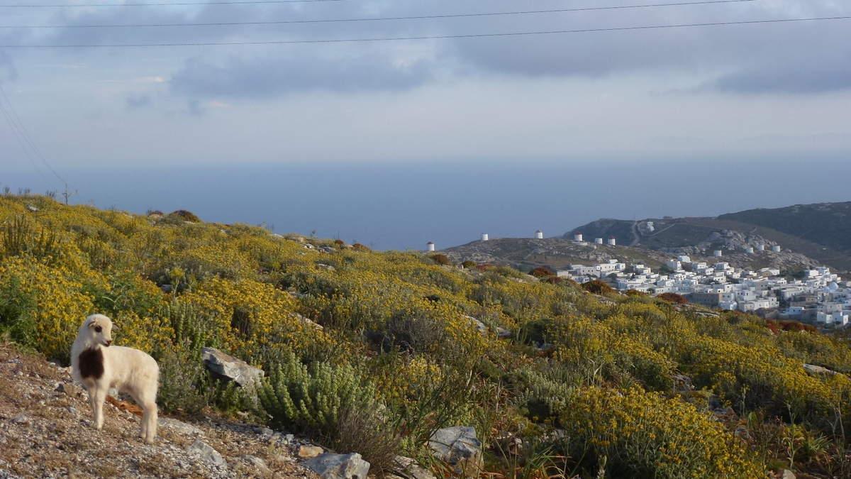 Kora capitale médiéval d'Amorgos, vue panoramique sur les Cyclades les plus proches
