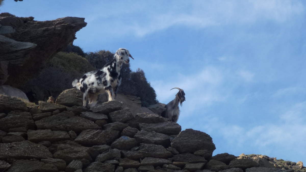 Des chèvres, des moutons, des ânes ..........et des hommes